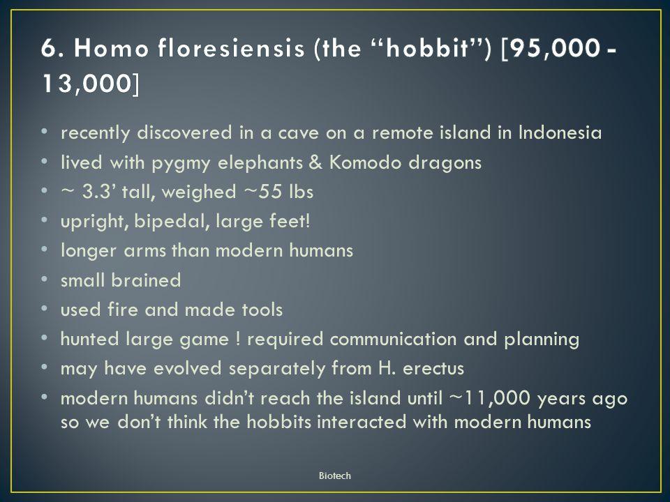 6. Homo floresiensis (the hobbit ) [95,000 - 13,000]